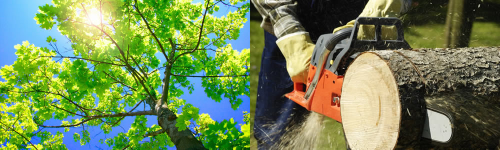 Tree Services Jeffersonville